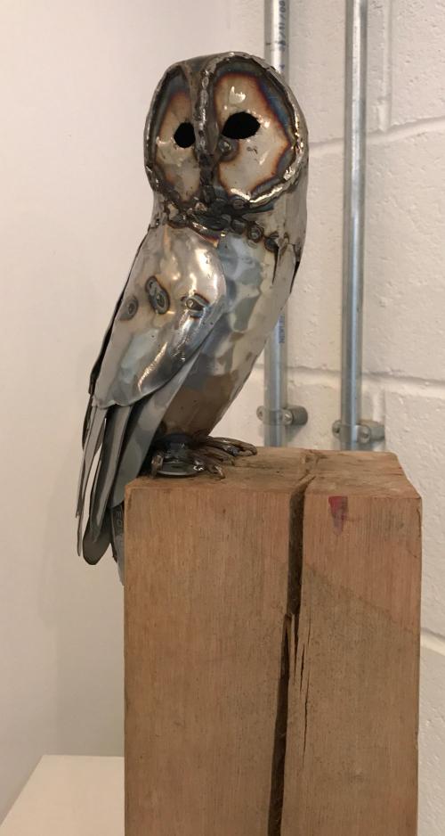 Tawny Owl on a beam