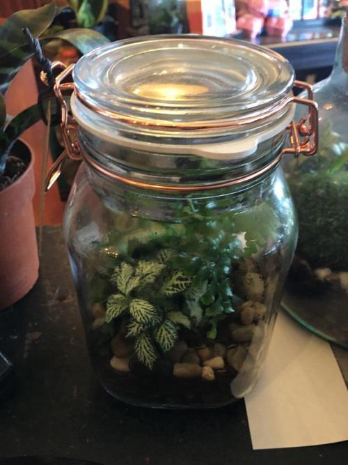 medium jar enclosed terrarium