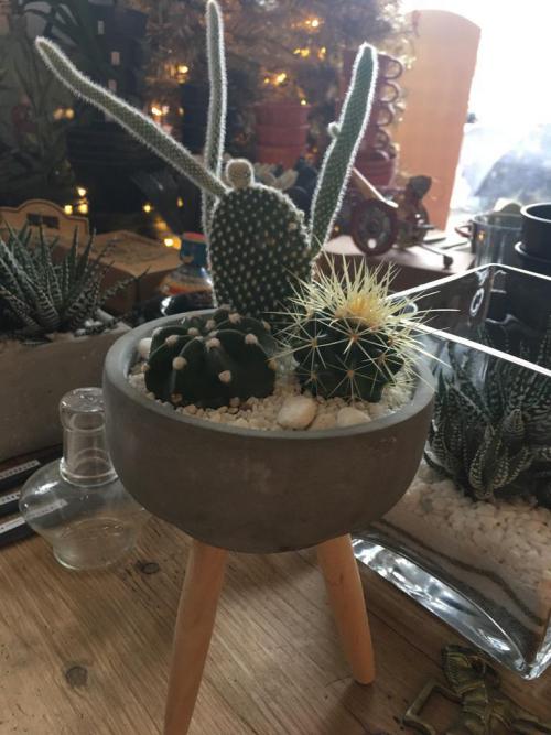 Trio Cacti Concrete Tripod Pot