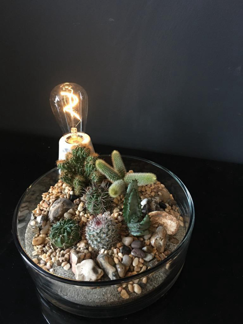 LG Cactus Garden