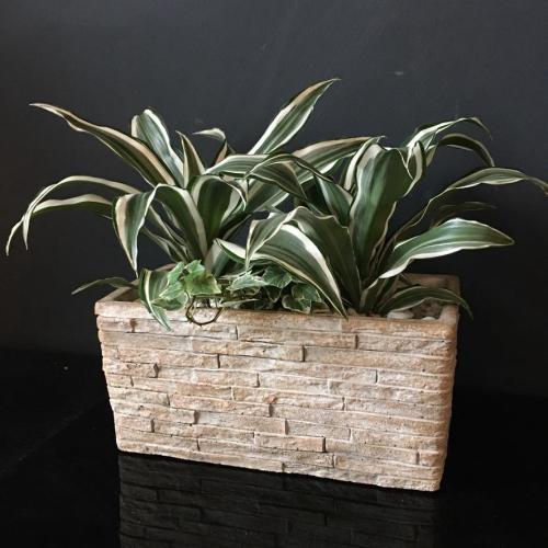 Dracenia Ivy Concrete Planter