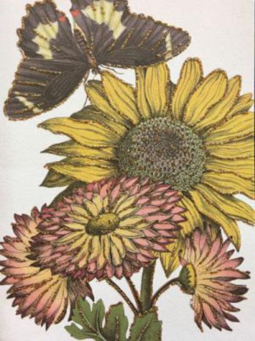 A6 Sunflower Vanilla Fly : 10K215