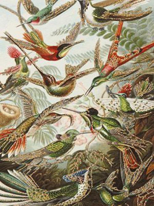 A6 Retro Birds Vanilla Fly : 10K146