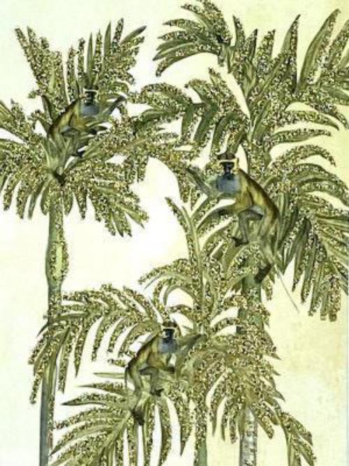 A6 Palm Monkey  Vanilla Fly : 10K241