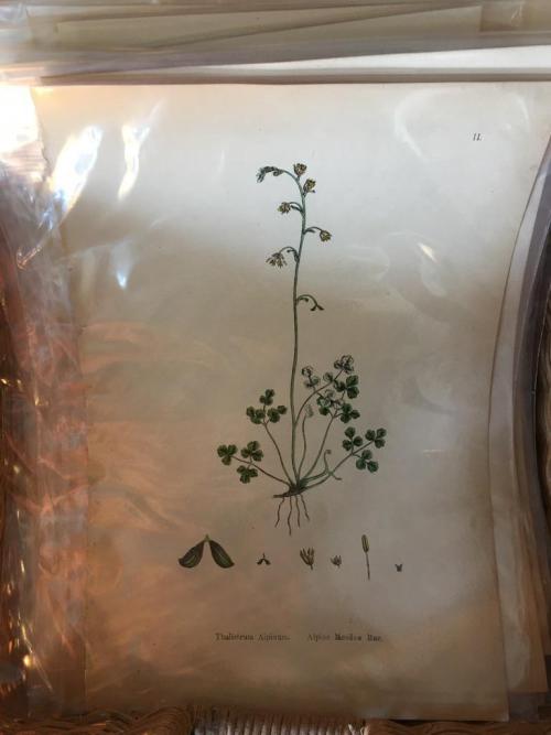Botanical Plates Unframed (Each)