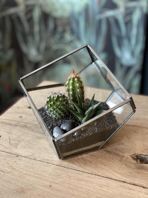 Trio Cactus
