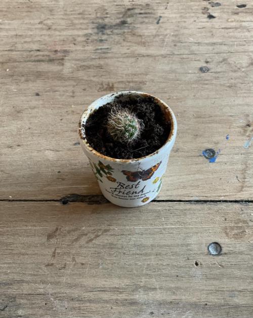Needle Cactus Vintage Pot