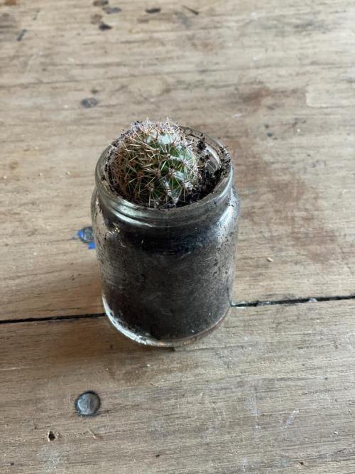 Thick Glass Cactus Pot