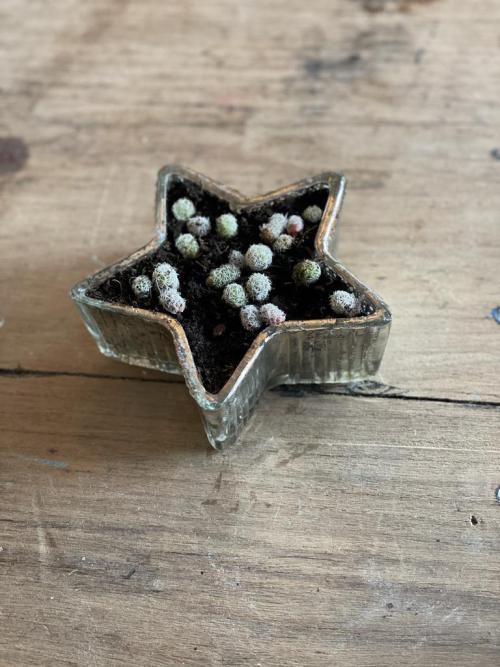Star Shaped Cactus Pot
