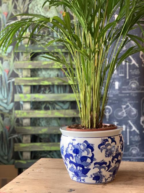 Large palm vintage blue/white Chinese planter
