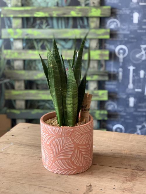 Snake Plant Leaf Print Pot