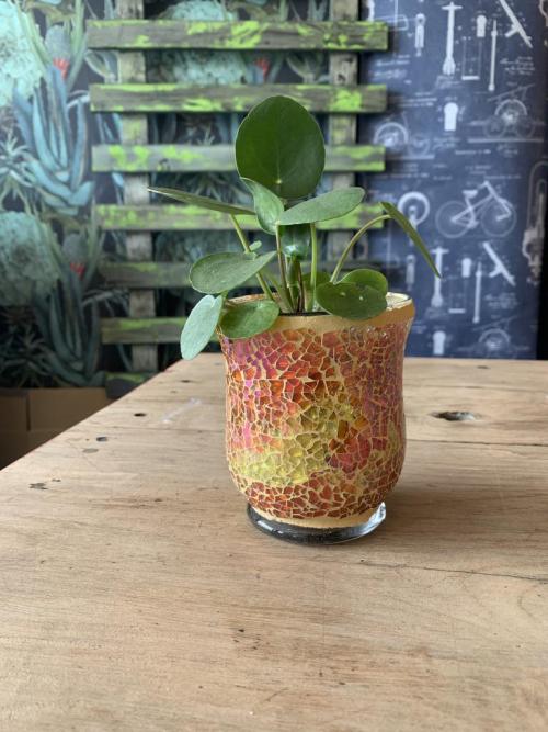 Chinese Money Plant Mosaic Pot