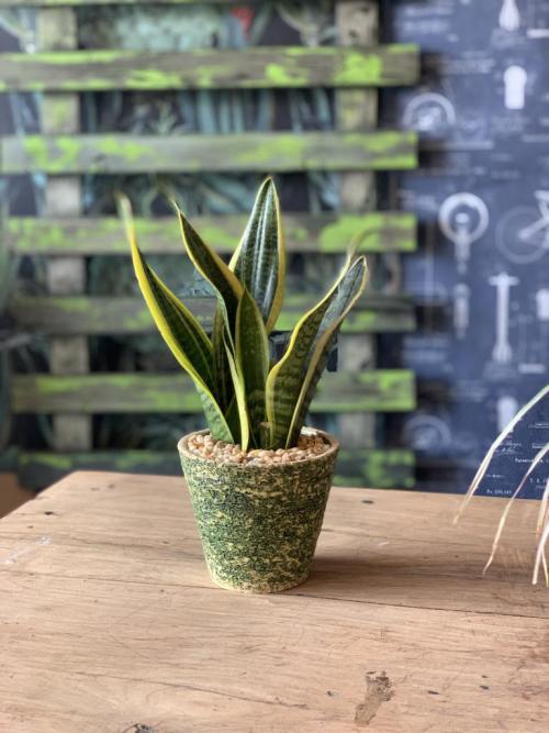 Snake Plant Handmade Green/Yellow Pot