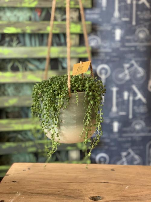 Lg String of Pearls Hanging Green Pot