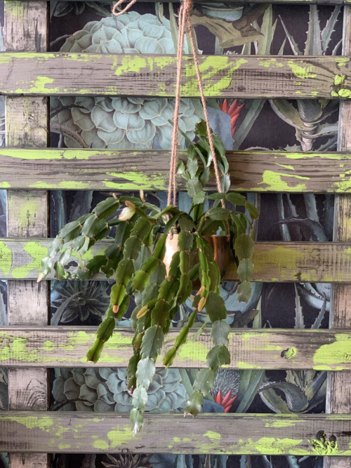 Easter Cactus Hanging Brass Dome