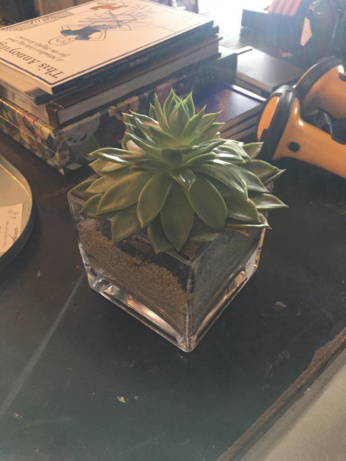 echrevia glass cube