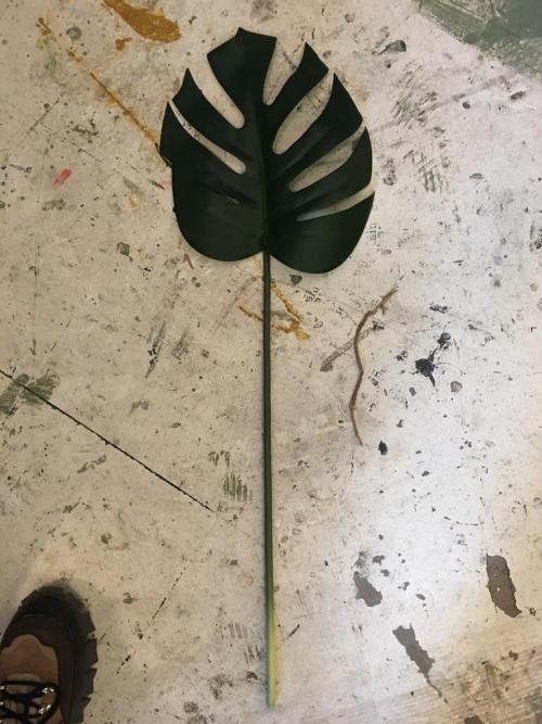Green Banana Plant Leaf