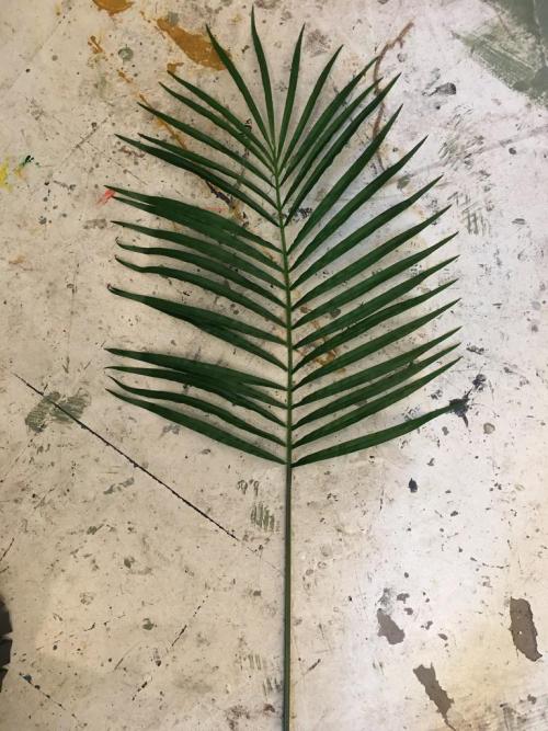 Fern Fax Leaf
