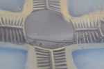 Rene Lalique opalescent coquilles no4 Plate